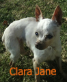 Clara Jane newsletter
