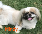 Mindy newsletter 6