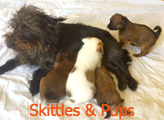 Skittles and pups newsletter